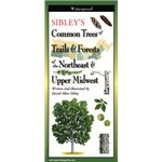 Sibley's Common Trees of Trails & Forests of the Northeast & Upper Midwest (folding guide) - David Allen Sibley
