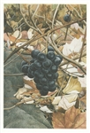 Wild Grapes Note Card - Abigail Rorer