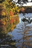 Autumn Comes to Walden Pond Postcard - Bonnie McGrath