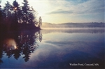 At Day's End at Walden Pond Postcard - Bonnie McGrath