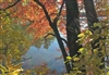 Autumn Colors at Walden Pond Postcard - Bonnie McGrath