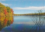 Walden Pond from Ice Fort Cove Postcard - Alice Wellington