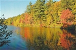 Thoreau Cove at Walden Pond Postcard - Alice Wellington